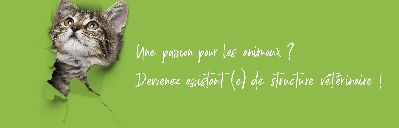 CPES_Bandeau_Chat papier (003)