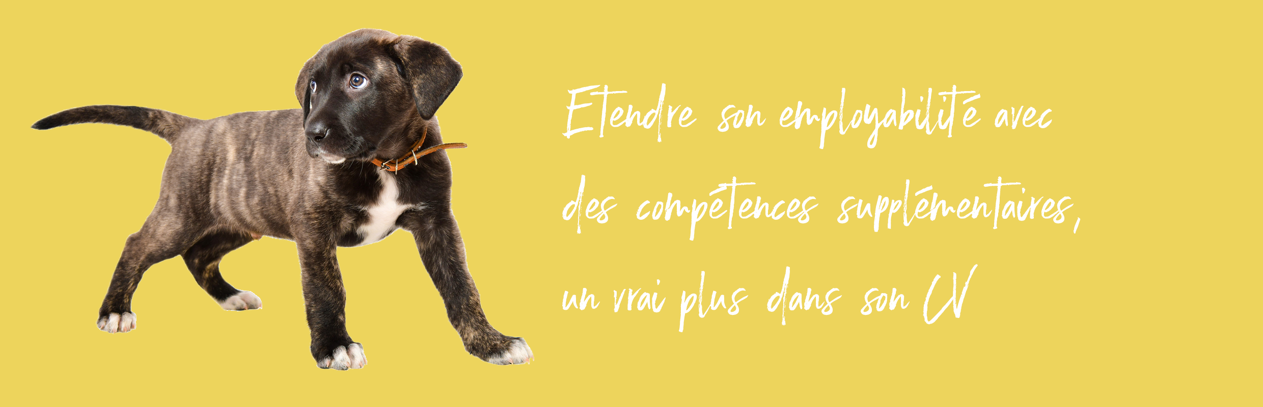 CPES_Bandeau_Chien pipi (002)
