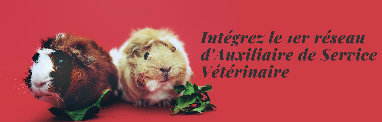 Devenez Auxiliaire de service vétérinaire (3)